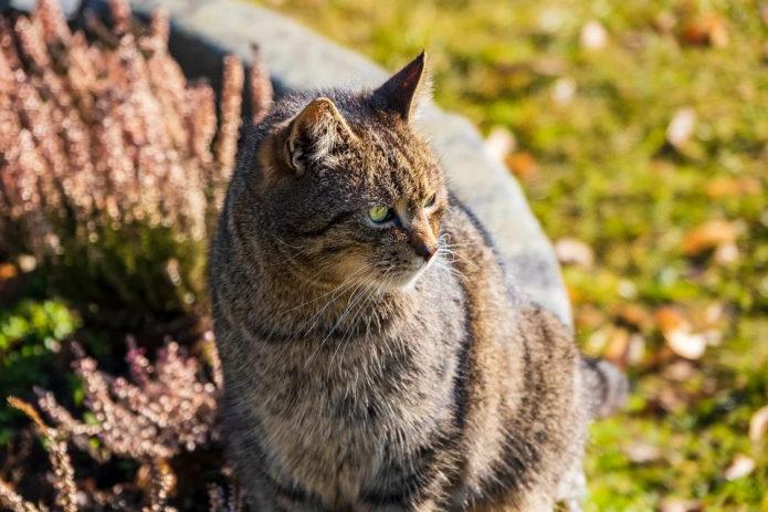 Comment gérer les parasites chez le chat ?