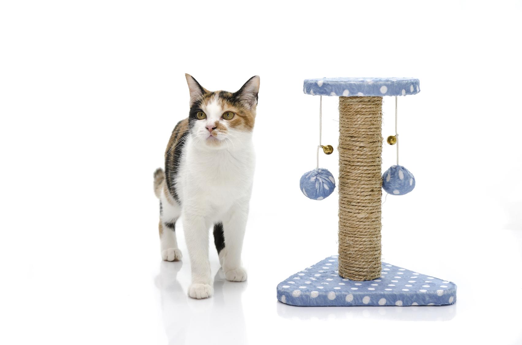 accessoires pour chats et chatons