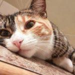 Comment gérer l'anxiété de séparation des chats