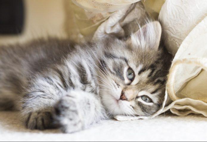 Allergie aux chats : quelles possibilités ?