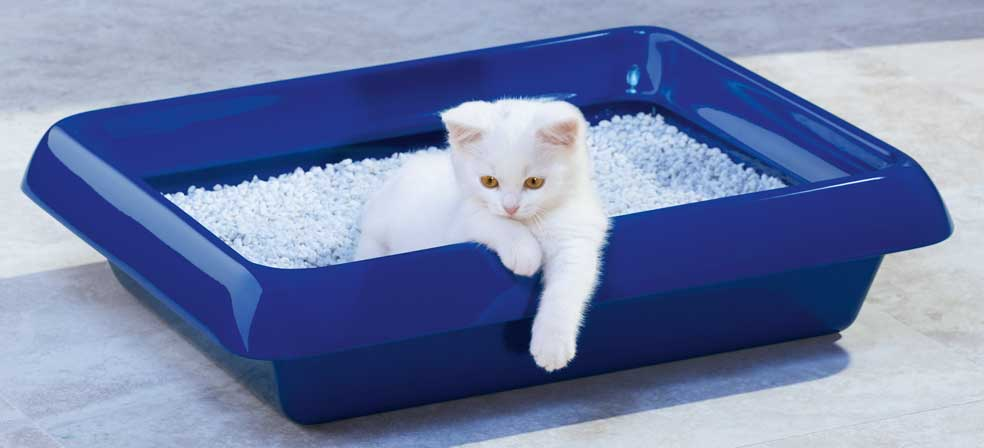 Quelle litière choisir pour votre chat ?
