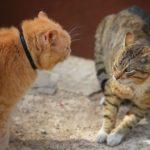 Comment les chats se battent-ils ?