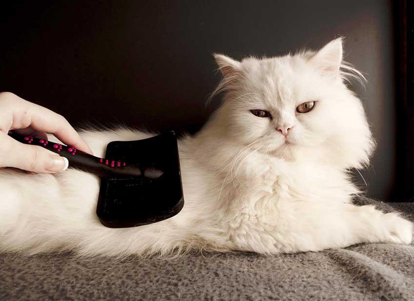 Prendre soin de son chat au quotidien