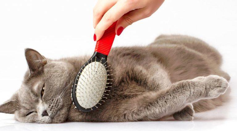 Comment bienbrosserson chat ?