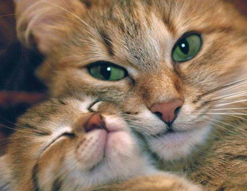 Pourquoi la chatte change-t-elle d'emplacement ses petits ?