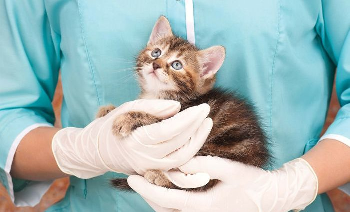 Soins et santé des chats