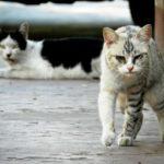 Comment choisir un spray contre les chats errants ?