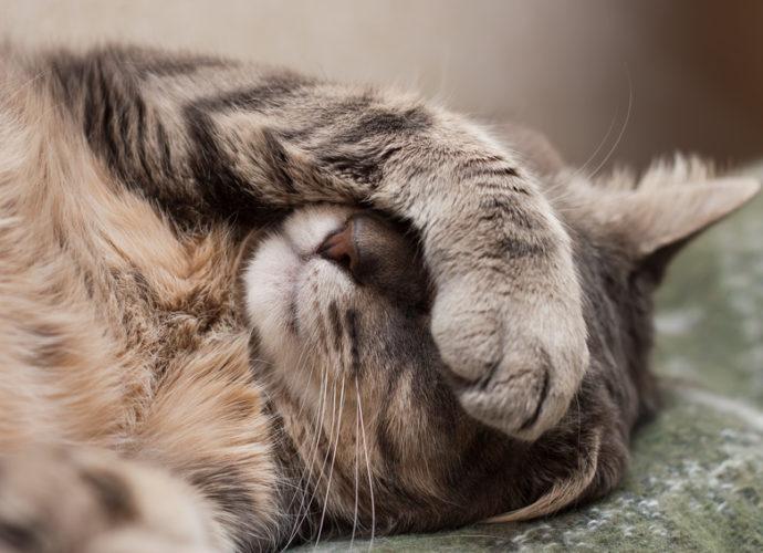 Comment le chat dort-il ?