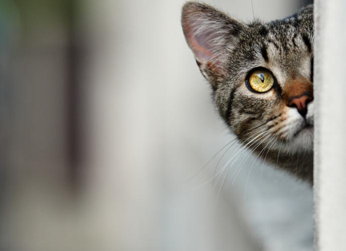 Quels sont les signaux que le chat envoie avec ses oreilles ?