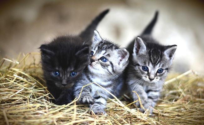 Faire don d'un chaton : les règles à suivre