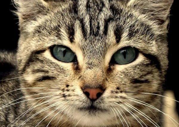 A quoi servent les moustaches du chat ?