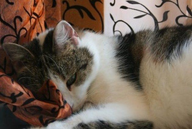 Comment soigner la dépression chez le chat