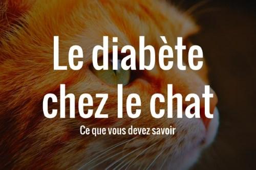 Le diabète des chats et comment le soigner
