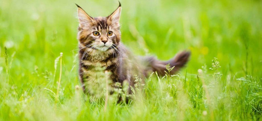 Comment calculer l'âge d'un chat en âge humain et savoir quel âge a mon chat en humain?