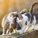Le chat est-il un animal sociable ?