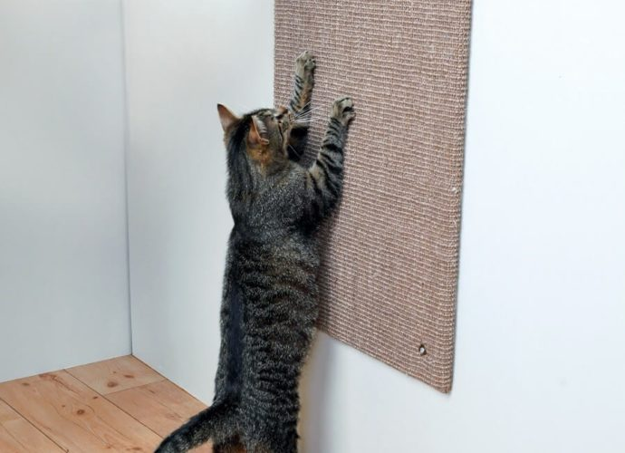 Pourquoi les chats grattent-ils?