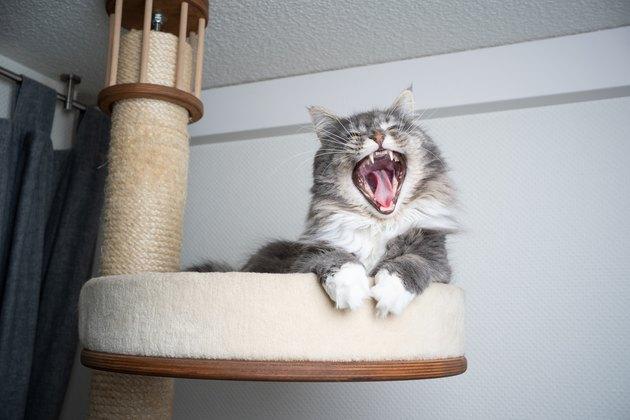 Comment choisir le meilleur griffoir pour votre chat