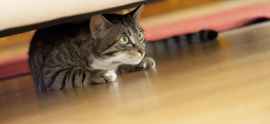 Comprendre les attitudes du chat