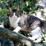 Comment le chat retrouve-t-il son chemin pour rentrer chez lui ?