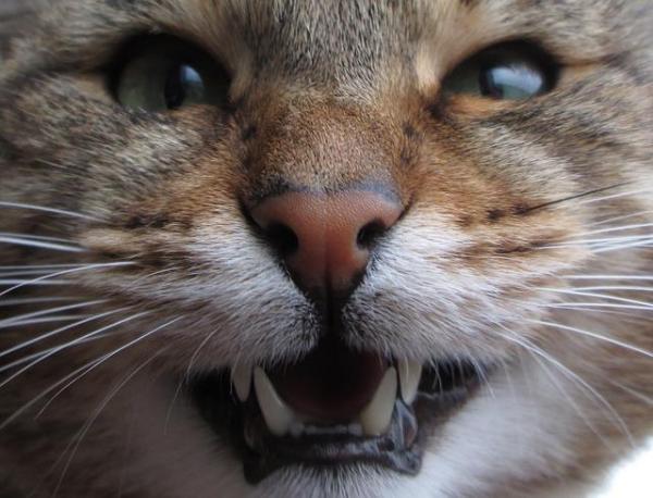Mon chat a mauvaise haleine