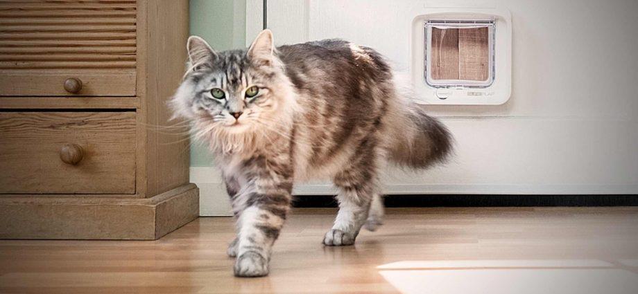 Pourquoi certains chats sautillent-ils sur leurs pattes arrière pour vous accueillir ?