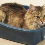 Quelle litière pour votre chat ?