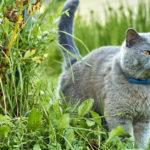 Pourquoi le chat mâle arrose-t-il d'urine le mur du jardin ?