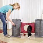 L'agility pour chat