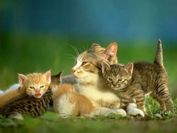 A quelle vitesse les chats se reproduisent-ils ?