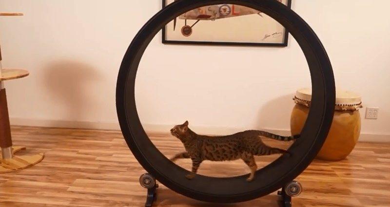 Les roues d'exercice pour chats