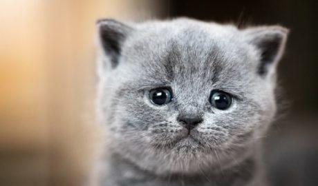 Mon chat est-il déprimé ?