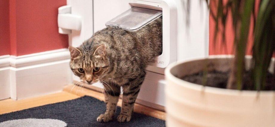 La chatière connectée SureFlap