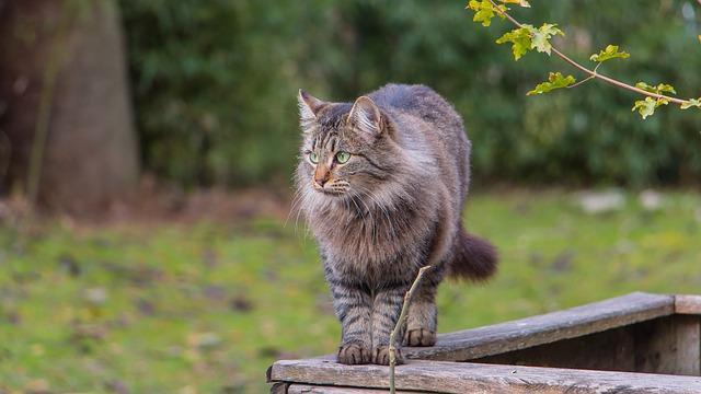 Quelle est la superficie du territoire du chat