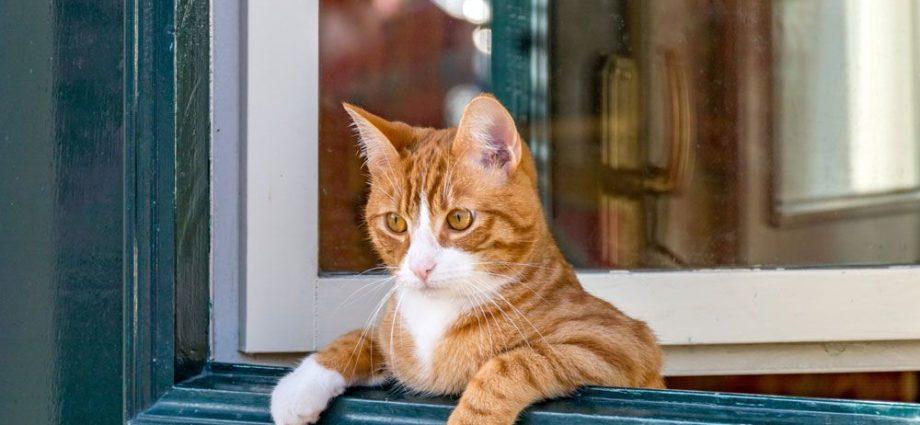 Pourquoi le chat miaule-t-il sans arrêt pour qu'on le laisse sortir ?