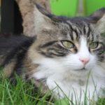 Puis-je utiliser un traitement vermifuge pour les chats sur les chiens ?